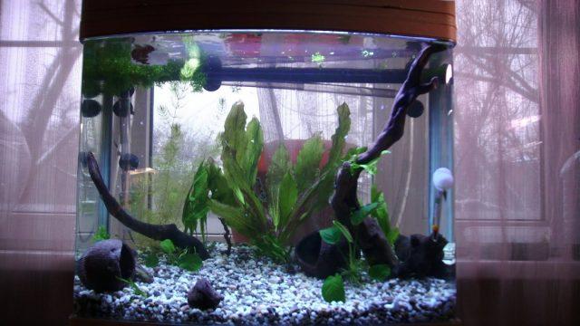 аквариум у окна