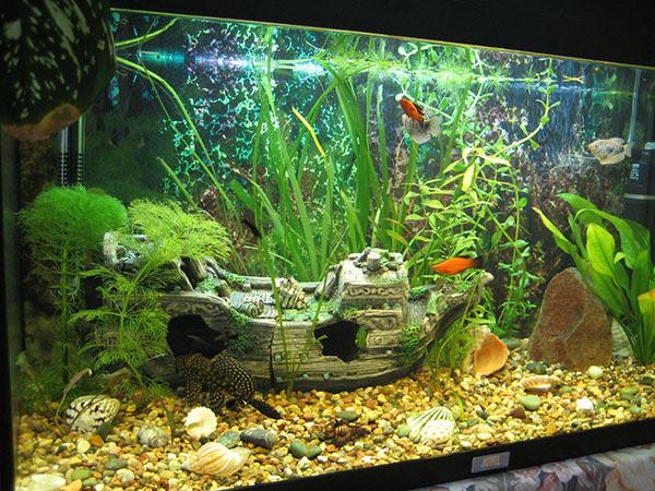 аквариум с тематическим фоном