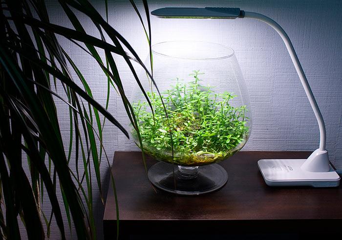 аквариум с растениями над водой