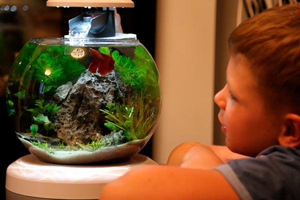 аквариум в детскую