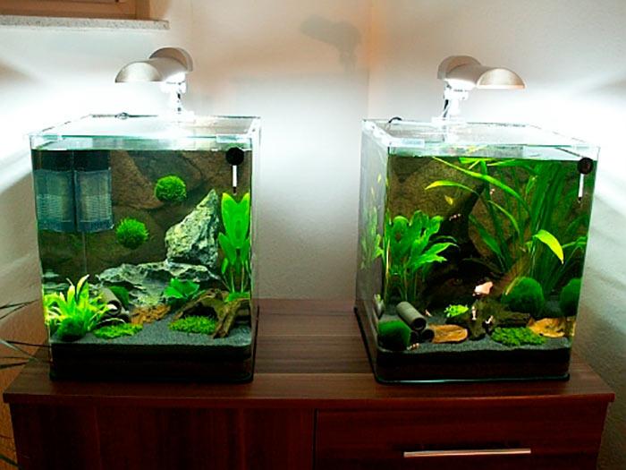 аквариум на 10 литров