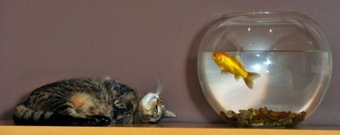кот и рыбка