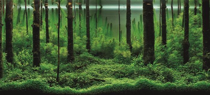 вкваскейп декорации аквариума